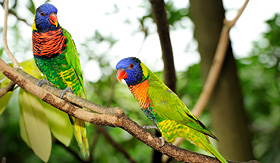 Princess Cruises happy parrot in Jurong Bird Park Singapore