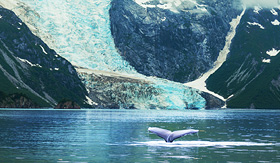 Princess Cruises Humpaback whale in Alaska