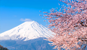 Princess Cruises Mt Fuji and cherry blossom at Lake Kawaguchiko