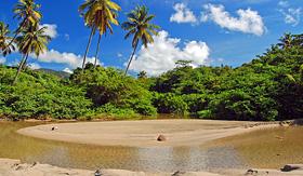 Princess Cruises palm trees on tropical lagoon La Sagesse beach on Grenada island