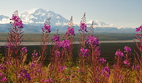 Princess Cruises view of Mt McKinley Denali Park