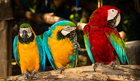 Princess Cruises - Colorful Macaw Parrots