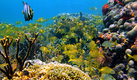 Regent Seven Seas Cruises colorful underwater marine life with shoal of tropical fish in a coral reef caribbean sea