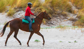 Man Horseback Riding on Beach in Aruba