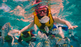 Woman Snorkeling with School of Fish in Roatan - Regent Seven Seas Cruises