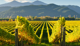 Royal Caribbean vineyard in Marlborough New Zealand