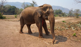Brown elephant standing on dirt road