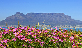 Silversea Cruises Table Mountain with flowers