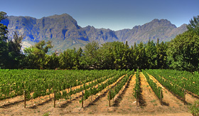 Silversea Cruises vineyard in Franschhoek Cape Town