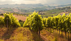 Silversea Cruises vineyard in Tuscany