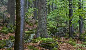Uniworld River Cruises Bavarian Forest, Germany