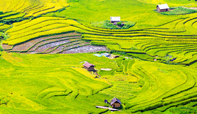 Uniworld River Cruises terraced rice fields in Lao Cai, Vietnam