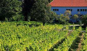Uniworld River Cruises vineyard in Bamberg, Germany