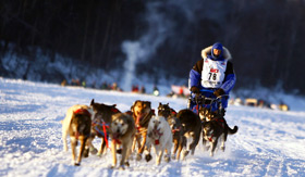 Iditarod Dog Sled Race in Alaska