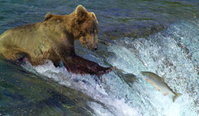 Bear Catching Salmon in Alaska