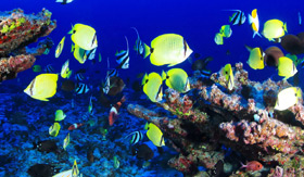 Colorful Southern Caribbean Fish - Windstar Cruises