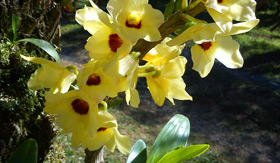 Orchid in Costa Rica - Windstar Cruises