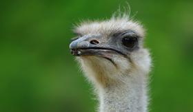 Curacao Ostrich Farm - Windstar Cruises