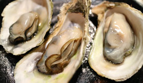 Raw Oysters from Canada