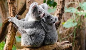 Zoos of Australia