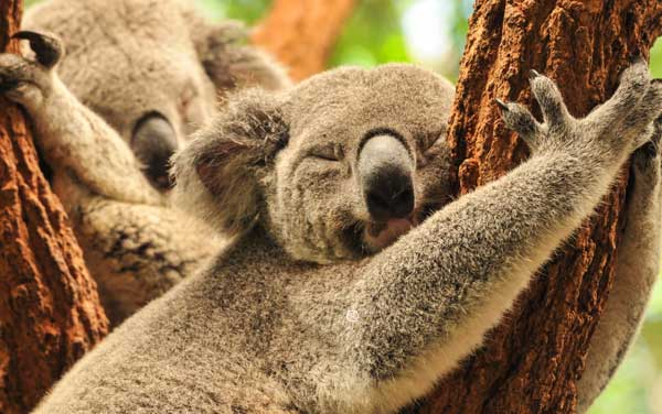 Australia & New Zealand Cruises from $179.00!*