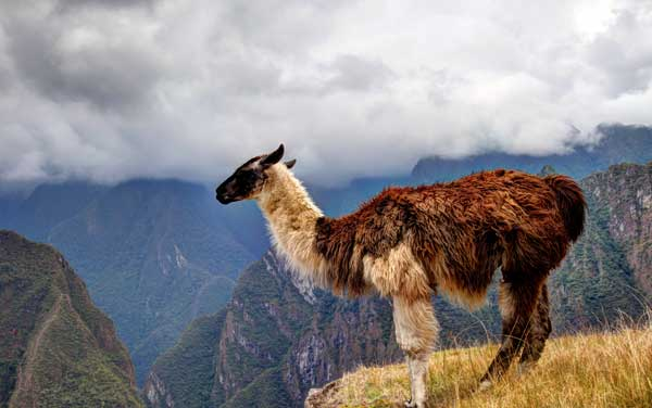 South America cruises from $199.00!*