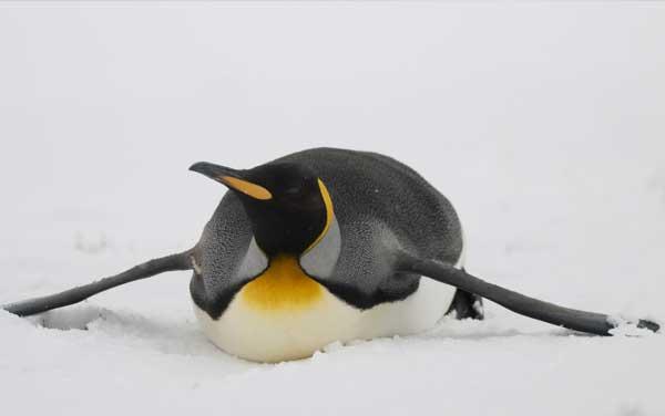 Antarctica Cruises from $7950.00!*