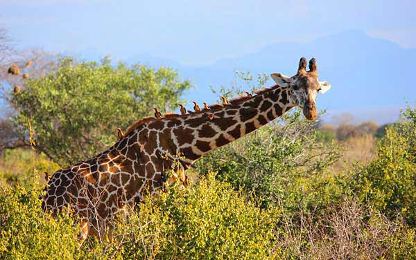 Africa Shore Excursions