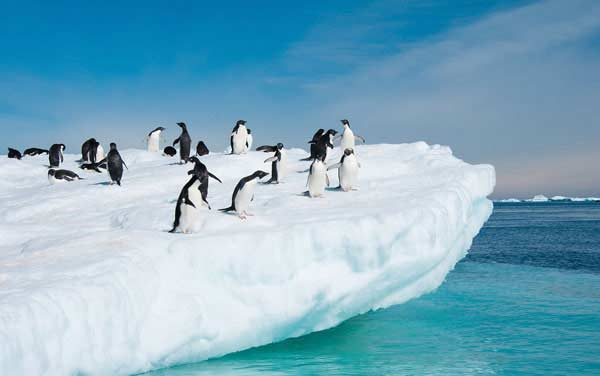 Antarctica Shore Excursions