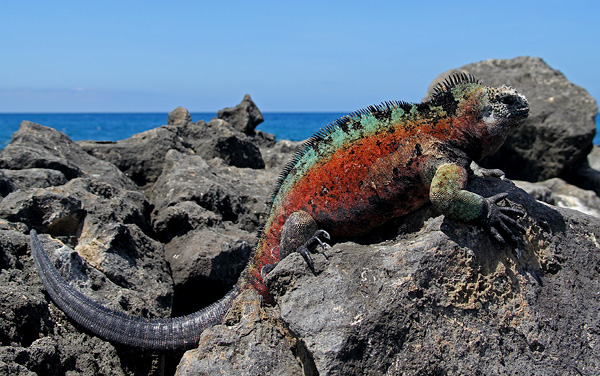 San Cristobal, Galapagos Islands