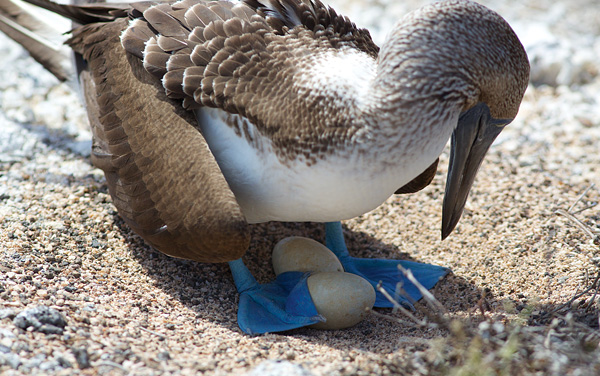 How to Choose & Plan Your Galapagos Cruise Guide