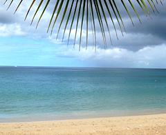 Beach Palm Tree