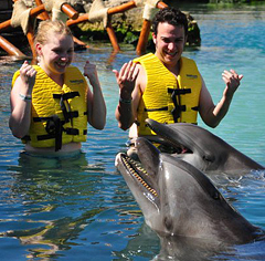 Lauren & Ben's Honeymoon- Dolphins