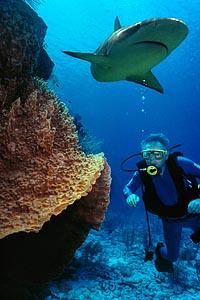 Scuba Diver Swimming Beneath Shark
