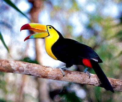 Carib Belize Toucan. Photo courtesy of Norwegian Cruise Line.