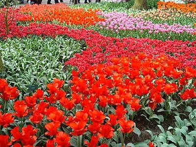 Kuekenhoff Gardens in The Netherlands.