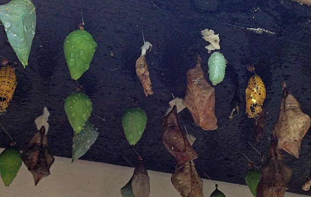 An assortment of cocoons
