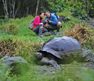 Giant Tortoise in the Galapagos Islands. Image courtesy of Celebrity Cruises.