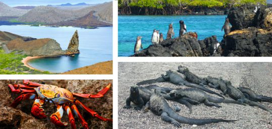 Avalon Waterways cruises to the Galapagos