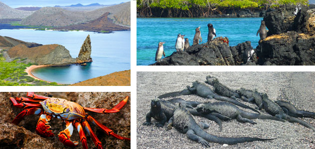 Avalon Waterways cruises to the Galapagos