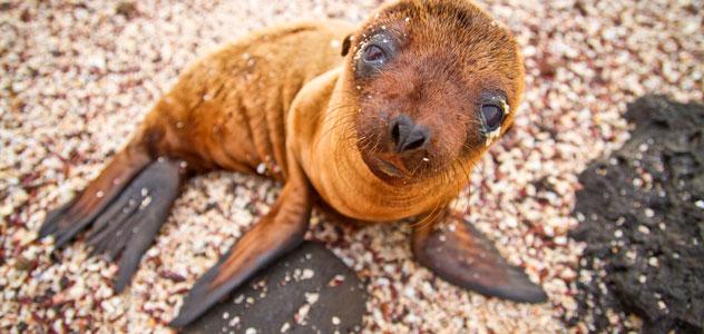 slide-baby-sea-lion