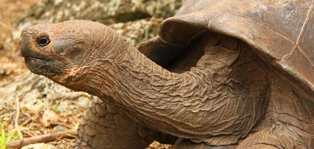 slide-galapagos-tortoise