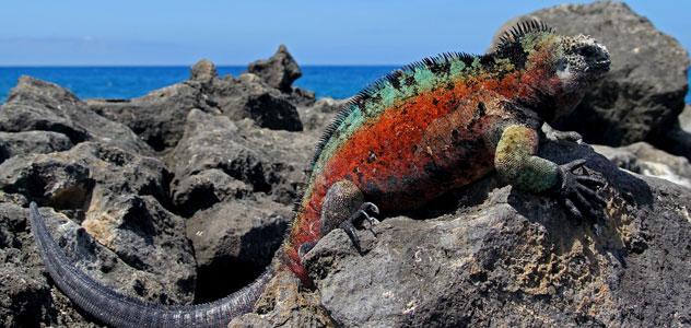 slide-iguana