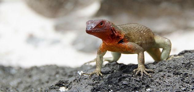 slide-lizard