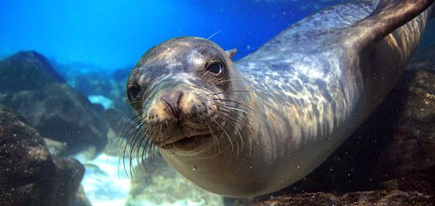 slide-sea-lion-underwater