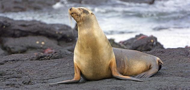slide-sea-lion