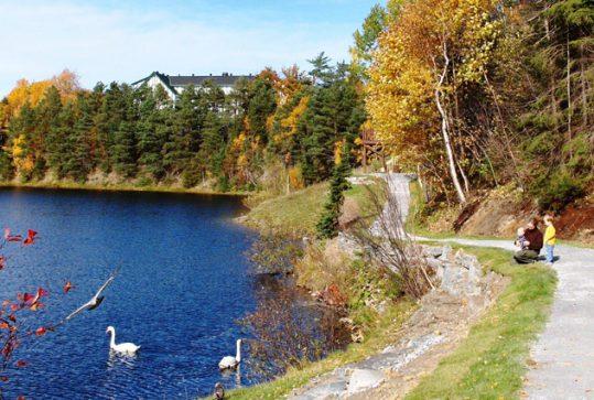 A trail along the Corner Brook Stream