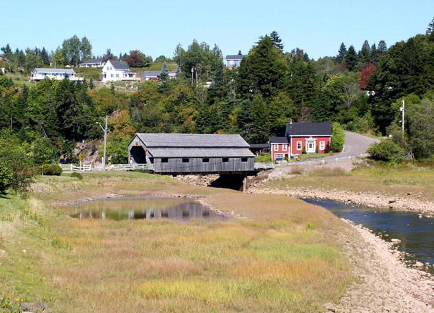 Saint Johns Landscape