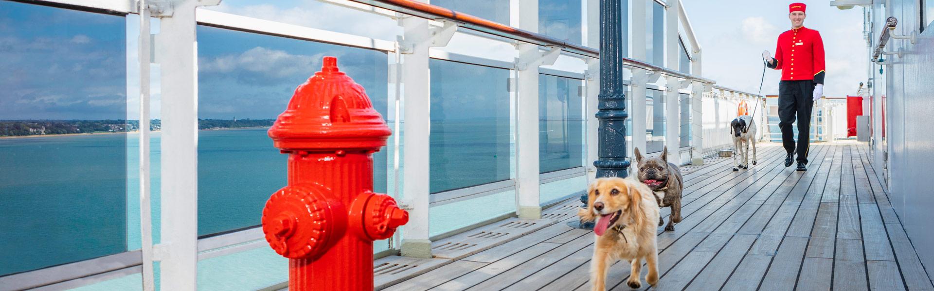 Do cruise ships allow dogs?