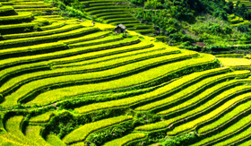 Rice terraces in Vietnam